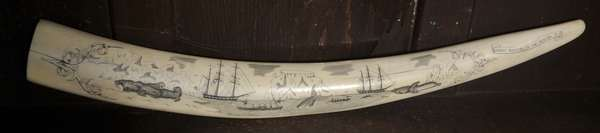 """An exceptional scrimshaw walrus tusk depicting whale and walrus hunting; showing ships, sailors, whales, and walruses. Titled """"Whale Hunting in The Bering Sea,"""" 24""""L."""