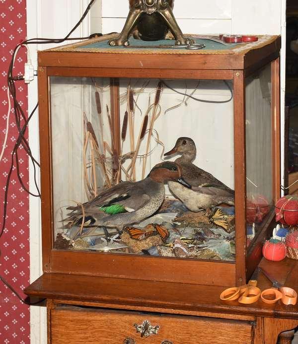 Duck diorama in case
