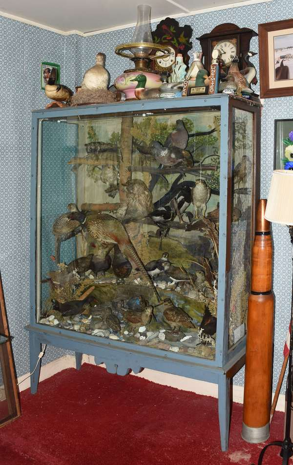 6' standing shadow display cabinet of a vintage menagerie of animals