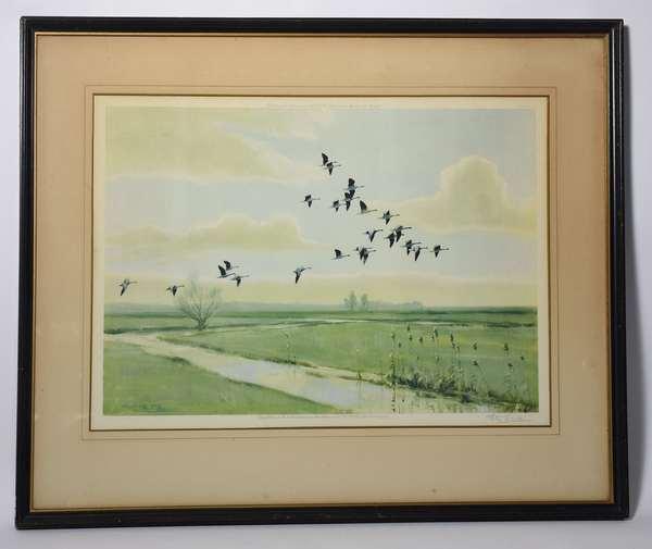 Peter Scott bird print, 1944, geese 15
