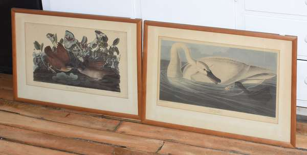 """Two Audubon prints """"Trumpeter Swan"""" and """"Key West Dove"""", 12.5"""" x 19"""" (897-31)"""
