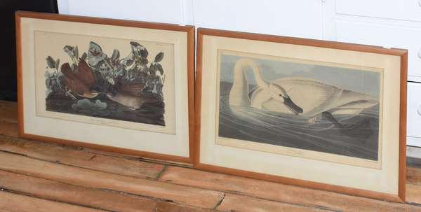 Two Audubon prints