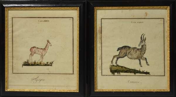 """Pair of early bestiary watercolors, 10.5"""" x 11.5"""""""