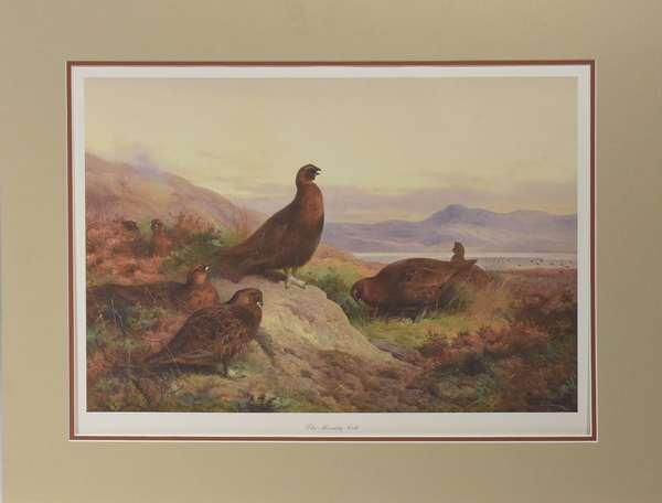 """Red Grouse Arthur Thornburn, limited edition, 17"""" x 23"""""""