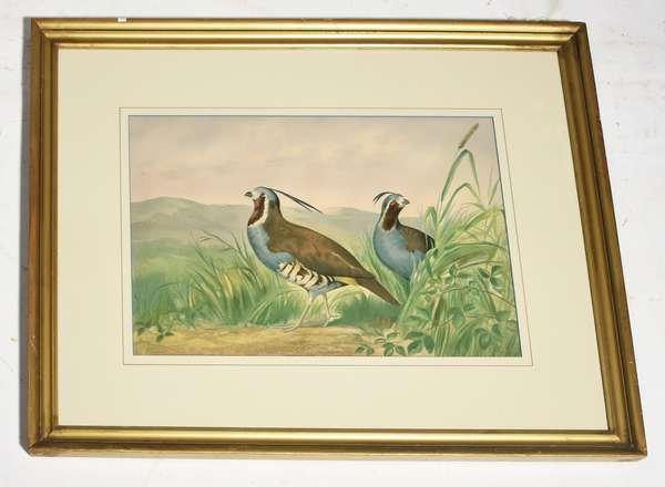 "A. Pope chromo-lithograph, game bird, 14"" x 19"" image"